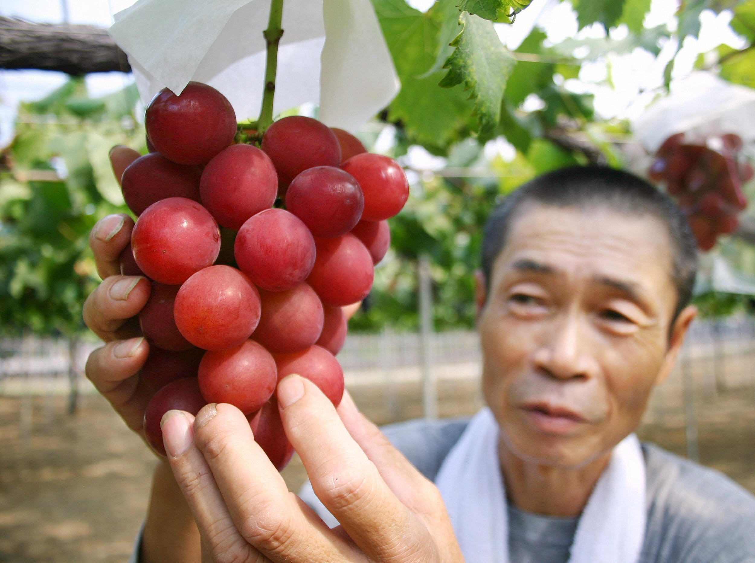 Fruta de lujo en Japón